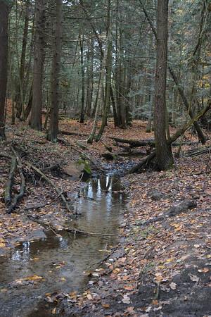 12 Brook trout habitat E Ravine
