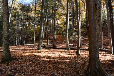 3 east ravine woods