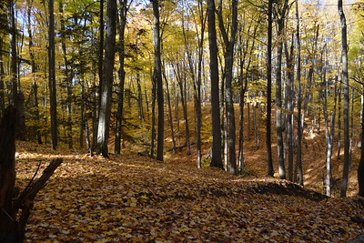 18 Woods West Ravubg