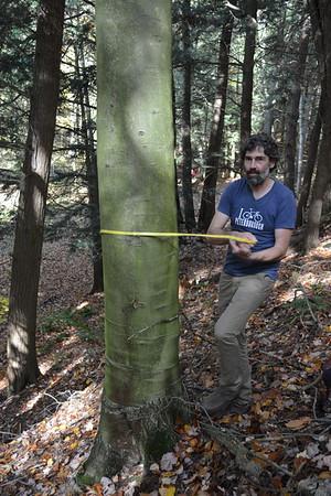 16 Measure diameter healthy beech