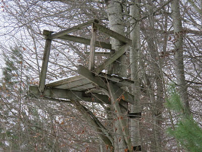 Tree stand, in Area 6 (Photo by Anne Tesluk)