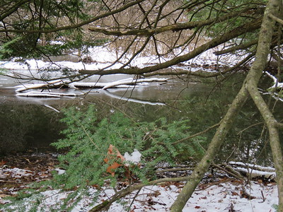 Beaver evidence , in Area 6 (Photo by Anne Tesluk)