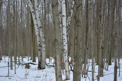 Regenerating hardwood forest, in Area 4 (Photo by Jennifer Jackman)