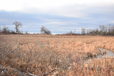 East Marsh, in Area 1 (Photo by Gerry McKenna)