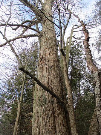 Tree, in Area 6 (Photo by Kathryn McHolm)