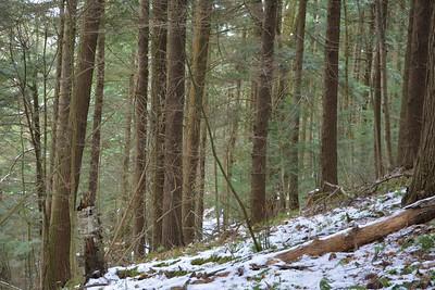 Eastern Hemlock forest in the West Ravine, in Area 4 (Photo by Jennifer Jackman)