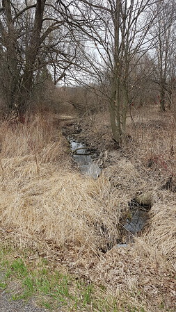 Wesleyville Creek northeast tributary upstream of field, east of Willow Beach road , in Area 3 (Photo by Gerry McKenna)