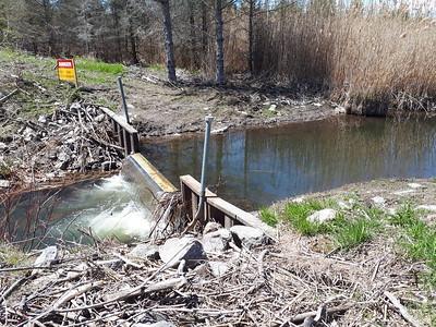 Lamprey barrier, Wesleyville Creek, in Area 1 (Photo by Jennifer Jackman)