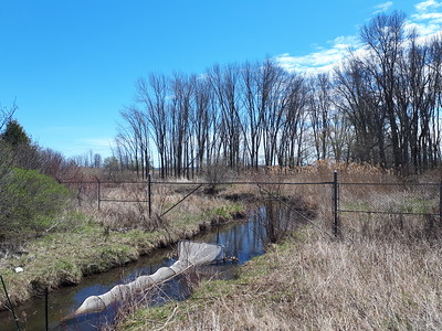 Net for catching lamprey and other fish, Wesleyville Creek at east marsh, in Area 1 (Photo by Jennifer Jackman)