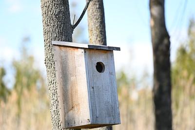 Wood Duck nest box - Wesleyville East Marsh , in Area 1 (Photo by Gerry McKenna)