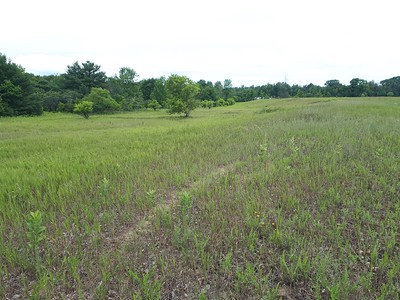 Grasslands looking north , in Area 5 (Photo by Samantha Dunlop)