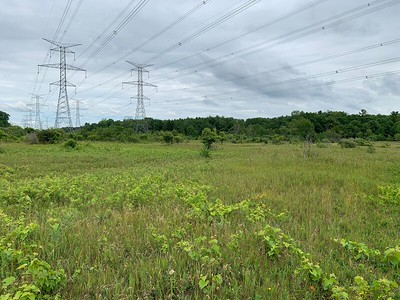 Hydro Corridor where Meadowlarks were seen , in Area 5 (Photo by Samantha Dunlop)
