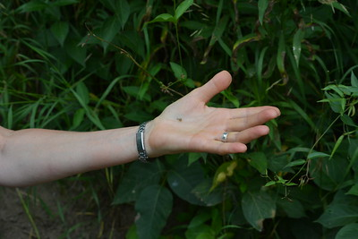 Tiny Snail , in Area 5 (Photo by Thomas Jackman)