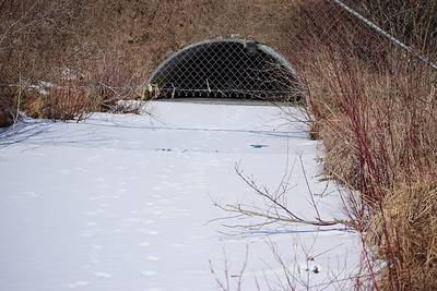 Wesleyville Creek - south end of culvert under site access road (view north). , in Area 1 (Photo by Gerry McKenna)