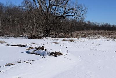 Beaver dam in Wesleyville West Marsh , in Area 2 (Photo by Gerry McKenna)