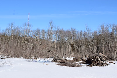 Wesleyville West Marsh - view north of beaver dam , in Area 2 (Photo by Gerry McKenna)
