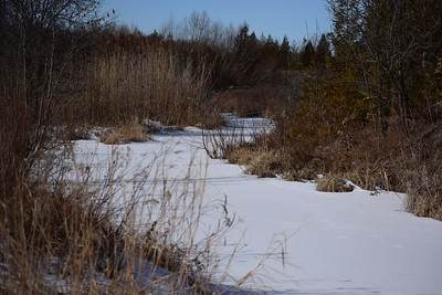 Wesleyville Creek south of access road culvert in East Marsh , in Area 1 (Photo by Gerry McKenna)