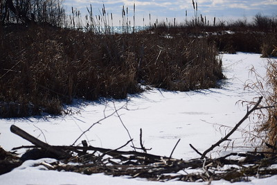 Wesleyville Creek (view south of Beaver Dam) with Lake Ontario in background , in Area 1 (Photo by Gerry McKenna)