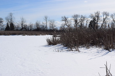 Wesleyville West Marsh view south , in Area 2 (Photo by Gerry McKenna)