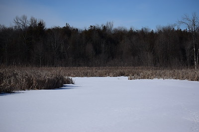 Wesleyville West Marsh - view of west edge from outlet area , in Area 2 (Photo by Gerry McKenna)