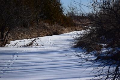 Wesleyville Creek immediately south of inlet culvert (East Marsh) , in Area 1 (Photo by Gerry McKenna)