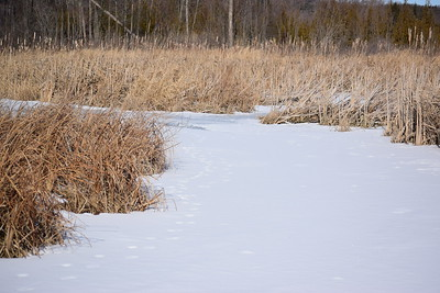 Wesleyville Creek upstream of outlet in East Marsh ( tracks visible) , in Area 1 (Photo by Gerry McKenna)