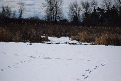 Beaver Dam in East Marsh (view south above dam) , in Area 1 (Photo by Gerry McKenna)
