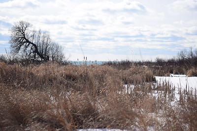 Wesleyville East Marsh - view south to outlet from Beaver Dam , in Area 1 (Photo by Gerry McKenna)