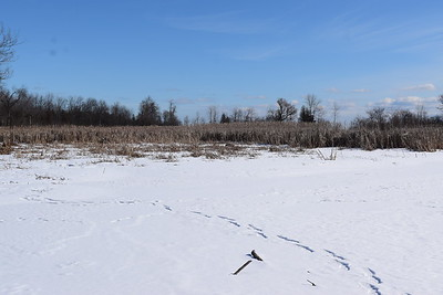 Wesleyville West Marsh - view south , in Area 2 (Photo by Gerry McKenna)