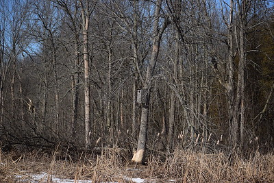 Wood Duck box in West Marsh along north edge , in Area 2 (Photo by Gerry McKenna)