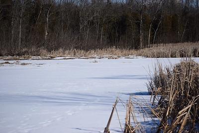 Wesleyville West Marsh - view east of eastern edge. , in Area 2 (Photo by Gerry McKenna)
