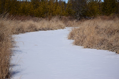 Wesleyville Creek north of Beaver Dam (view north) , in Area 1 (Photo by Gerry McKenna)