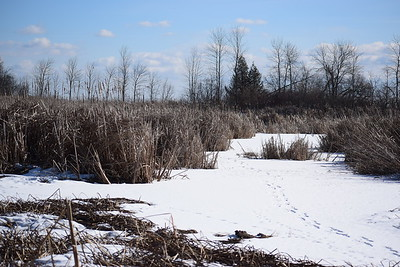 Wesleyville West Marsh - view south to L. Ontario , in Area 2 (Photo by Gerry McKenna)