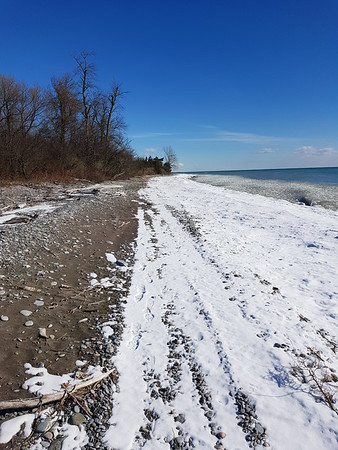 Wesleyville Shoreline - view east from area of West Marsh , in Area 2 (Photo by Gerry McKenna)