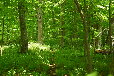 Woodland habitat in southeast corner of OPG property along shoreline , in Area 1 (Photo by Gerry McKenna)