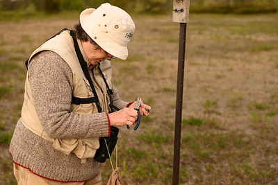 Elizabeth Kellogg attaches leg band to tree swallow nestling , in Area 1 (Photo by Gerry McKenna)
