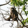 103 Mole National Park