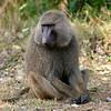104 Mole National Park