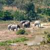 098 Mole National Park