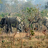 089 Mole National Park