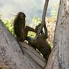 099 Mole National Park