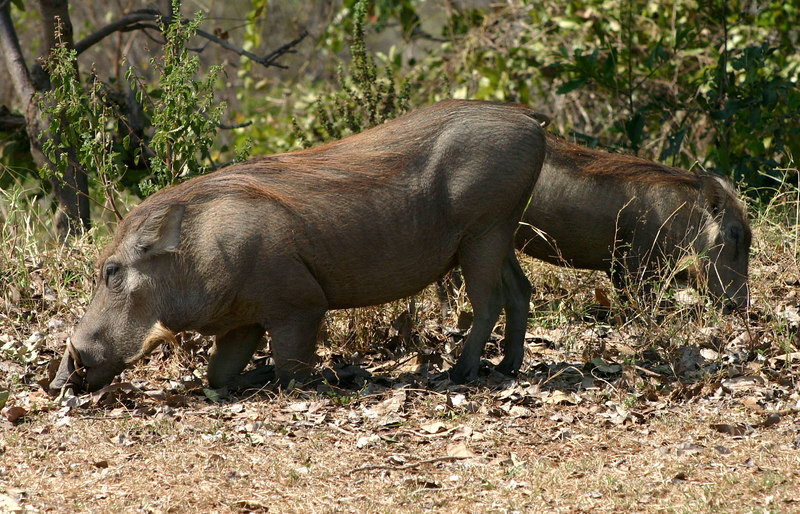 061 Mole National Park