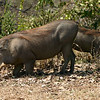 061 Mole National Park