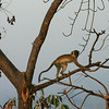 084  Mole National Park