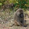 105 Mole National Park