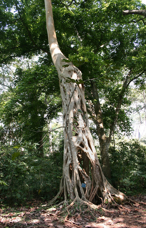 013 Boabeng-Fiema Sanctuary