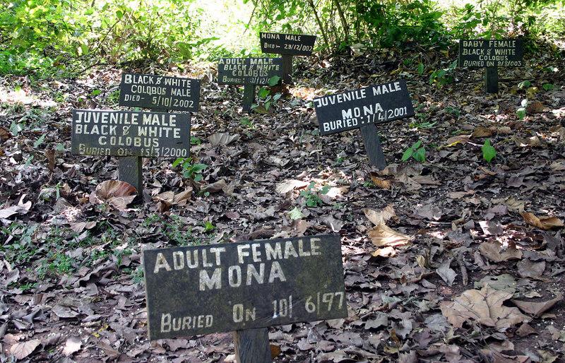 012 Boabeng-Fiema Sanctuary