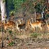 085 Mole National Park