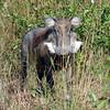 091 Mole National Park