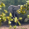 093 Mole National Park
